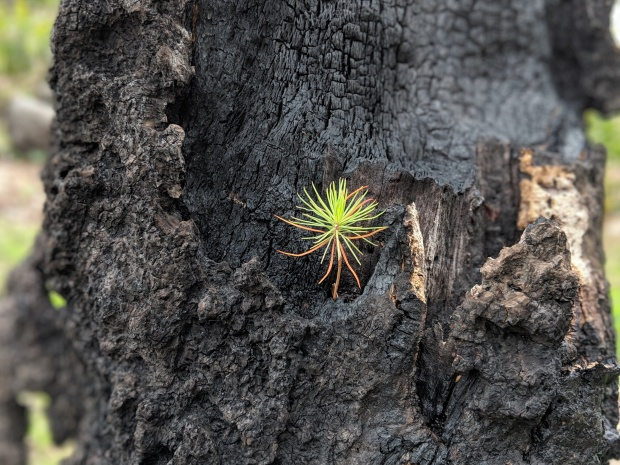 Just like a seedling that turns into a tree after forest fires have ravaged the land...you too can thrive